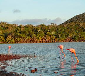 Cormorant Point Archipel ATC Cruises Galapagos Islands Ecuador