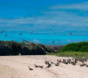 Darwin Bay Archipel ATC Cruises Galapagos Islands Ecuador