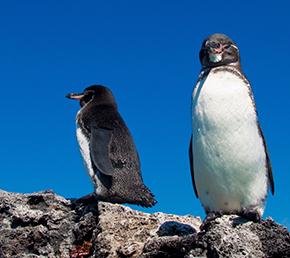 Espinoza point Archipel ATC Cruises Galapagos Islands Ecuador