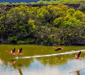 moreno point Archipel ATC Cruises Galapagos Islands Ecuador