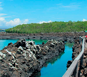 Las Tintoreras Archipel ATC Cruises Galapagos Islands Ecuador
