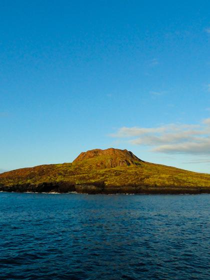 Catamaran Archipel ATC Cruises Galapagos Islands wildlife Ecuador Chinese hat