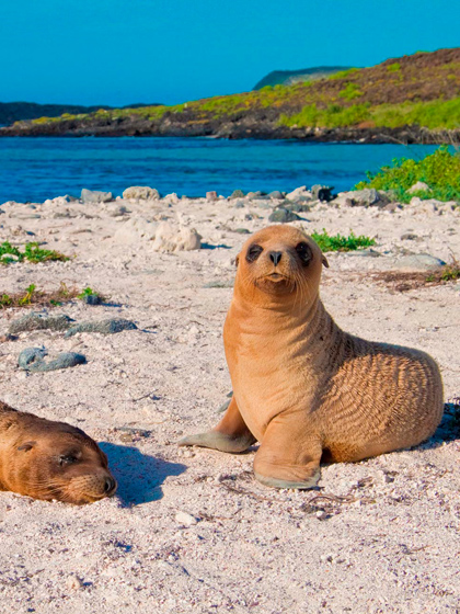 Catamaran Archipel ATC Cruises Galapagos Islands wildlife Ecuador