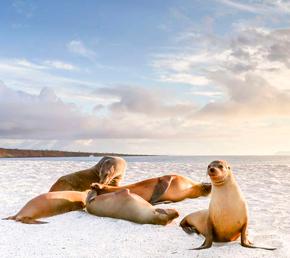 lobos marinos en Isla Mosquera Galápagos