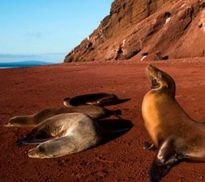 Isla Rabida en la Galapagos