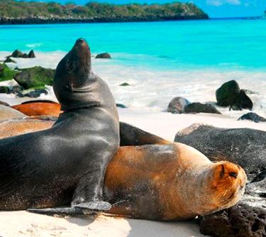 sea lion galapagos islands unique ATC Cruises Galapagos Islands Ecuador
