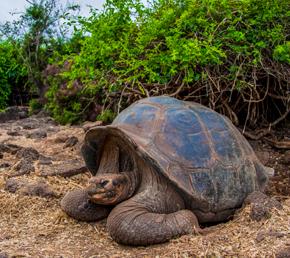 Charles Darwin Archipel ATC Cruises Galapagos Islands Ecuador