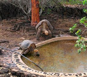 el chato reserve Archipel ATC Cruises Galapagos Islands Ecuador