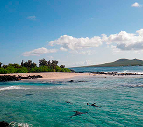 Loberia Archipel ATC Cruises Galapagos Islands Ecuador