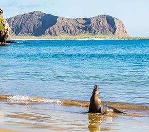 Lobos Islet San Cristobal Archipel ATC Cruises Galapagos Islands Ecuador