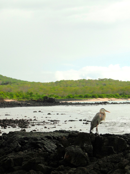 Catamaran Archipel ATC Cruises Galapagos Islands wildlife Ecuador Dragon Hill